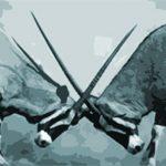 Conflict Over Risk Management
